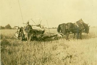 threshing with horses
